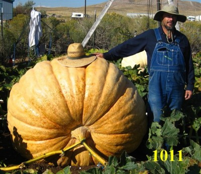 2010 Wyoming Pumpkin Record
