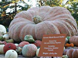 2011 World Pumpkin Record at New York City